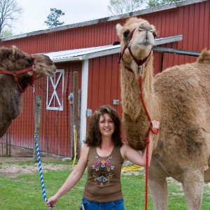 camels and marsha